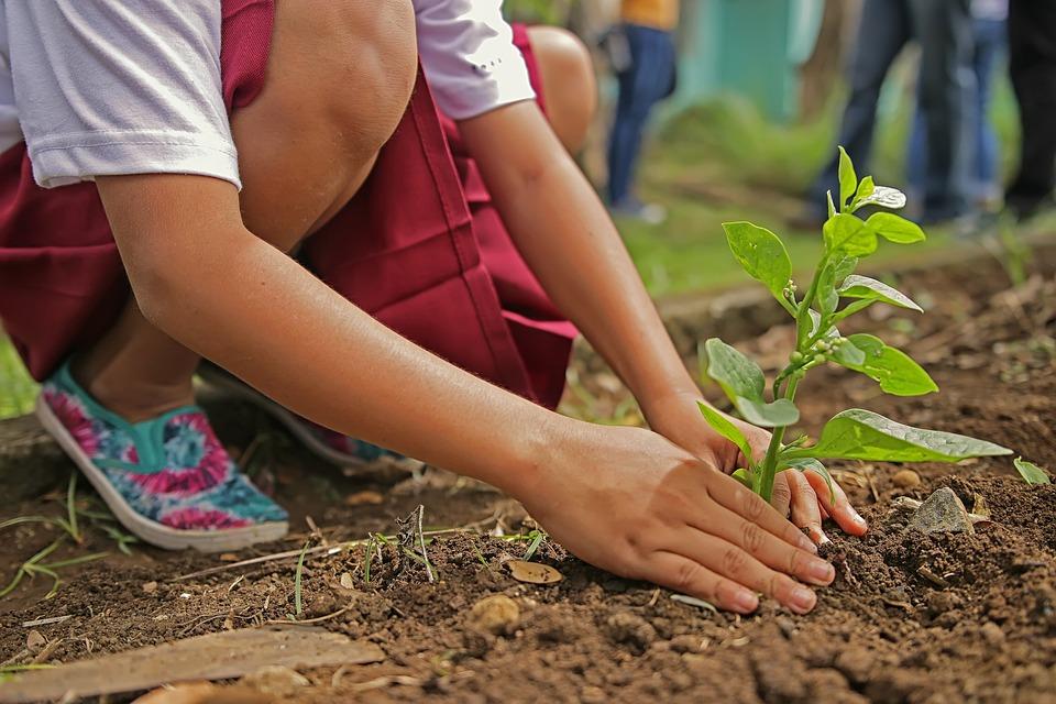 Planting, Environment, Nature, Botany, Tree, Leaf