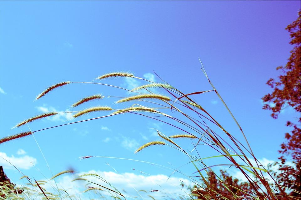 Sunshine, Plants, Blue, Sky