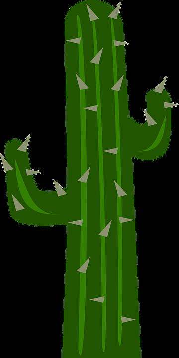 Cacti, Cactus, Garden, Gardening, Plants, Thorns