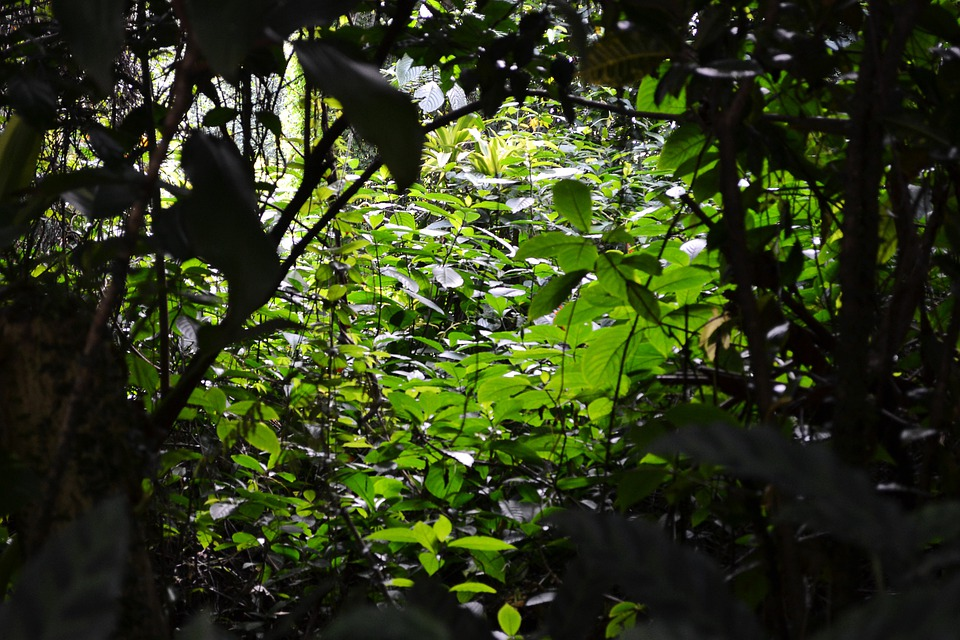 Sunlight Through Leafs Sun Light Dark Shadow Plants