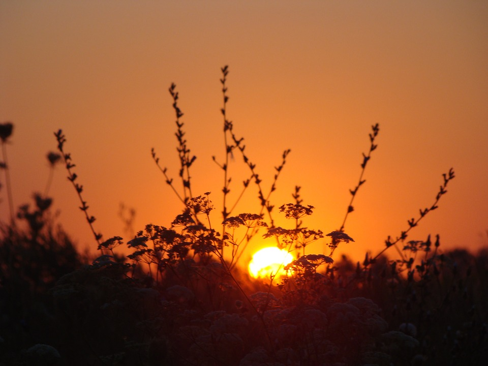 Dawn, Sun, Field, Plants