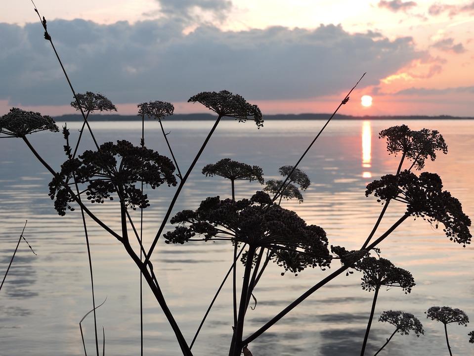 Silhouette, Plants, Black, Sunset, Heaven, Evening