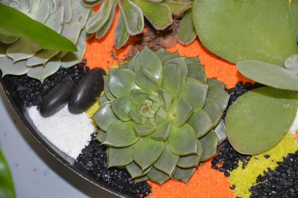 Plant, Floral Composition, Cactus, Plants Exotic, Green