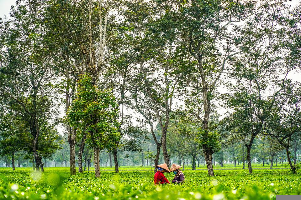 Farmers, Field, Rural, Trees, Plants, Workers