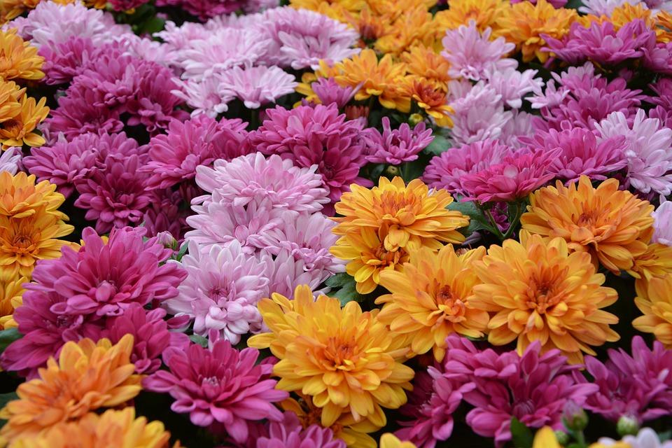 Flower, Flowers, Plants, Flowers All Saints ' Day