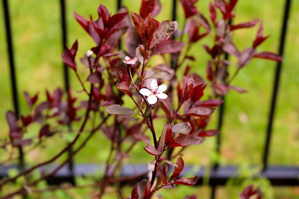 Flower, Spring, Nature, Summer, Plants, Tree, Petals