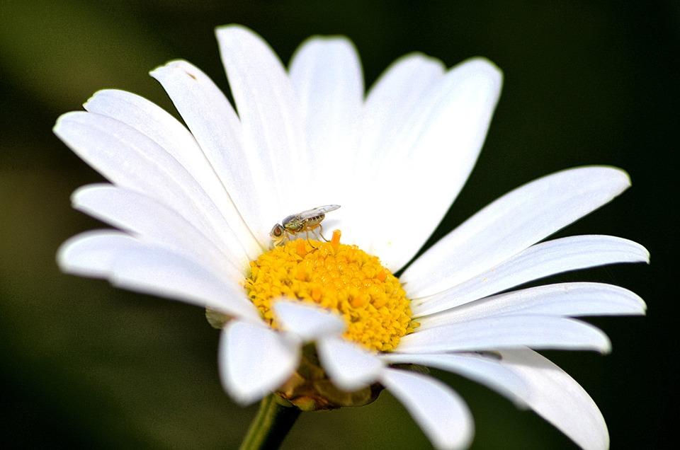 Flower, Flowering, Garden, Nature, Plants, Color, White