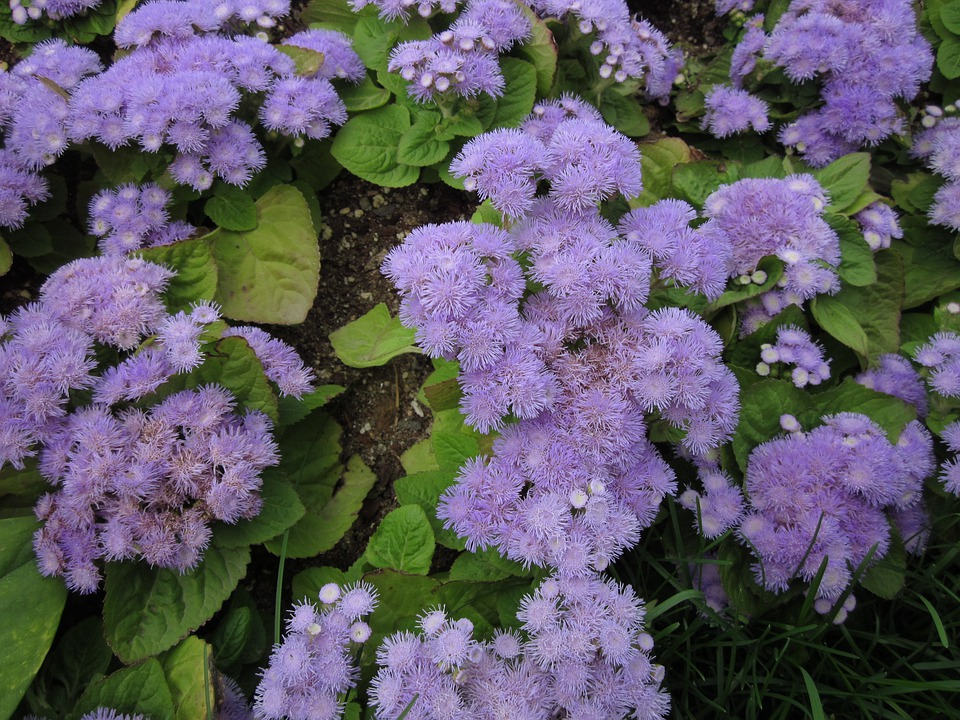 Flowers, Plants, Nature