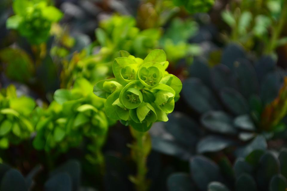 Plants, Flowers, Nature