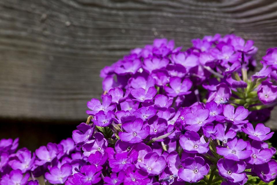 Plant, Purple, Plants, Flower, Nature, Bloom, Flowers