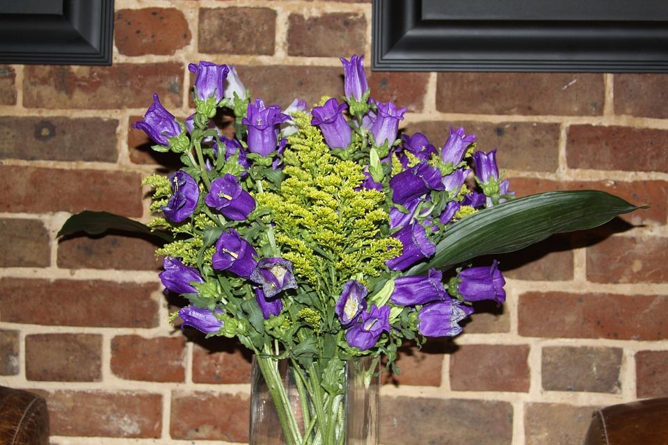 Flowers, Floral, Purple, Petals, Plants