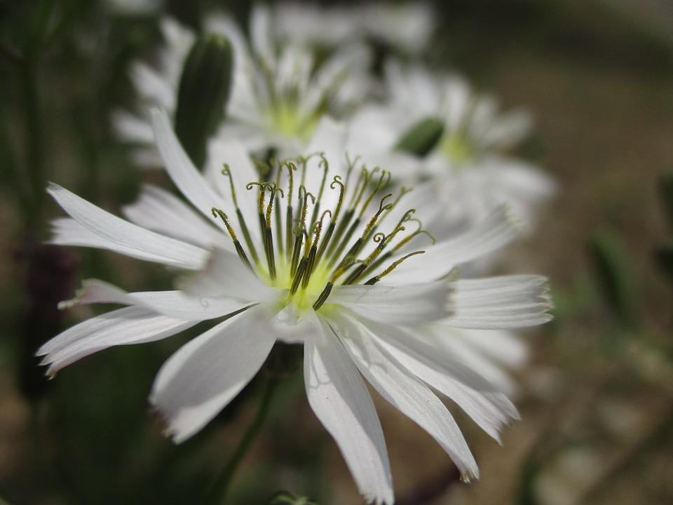 Flowers, Plants, Spring