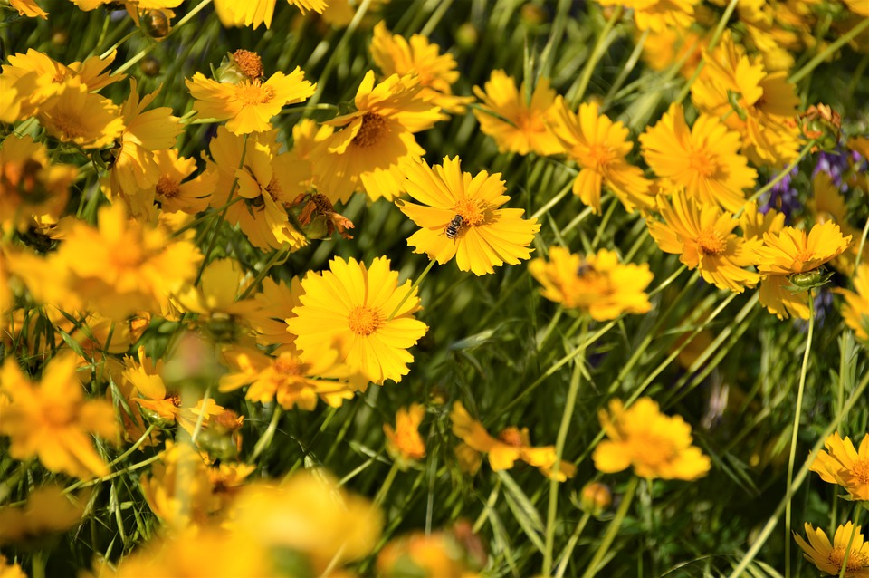 Free photo plants flowers yellow flower wildflower landscape max pixel flowers wildflower yellow flower plants landscape mightylinksfo
