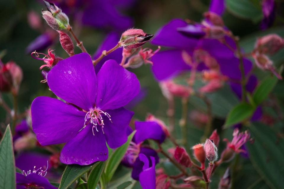 Flower, Nature, Violet, Flowers, Garden, Macro, Plants