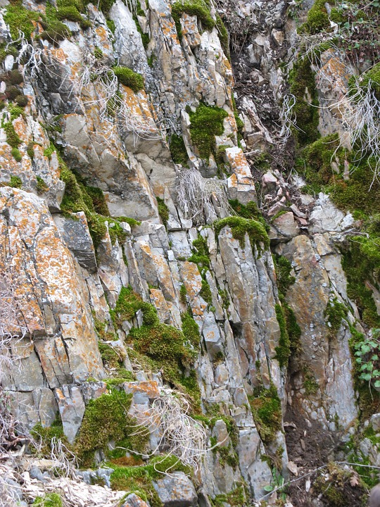 Stone, Wall, Gray, Green, Cliff, Color, Plants, Orange