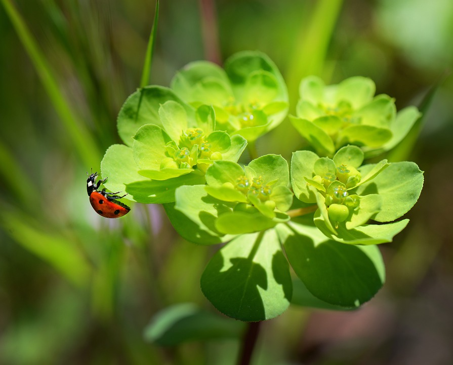 Ladybug, Nature, Macro, Flowers, Plants, Red, Insects