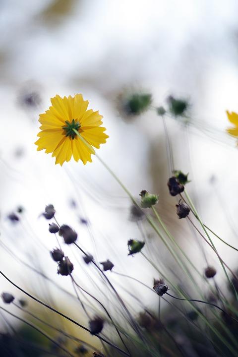 Autumn, Yellow, Flowers, Nature, Leaf, Plants, Park