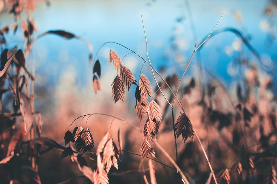 Plants, Leaves, Foliage, Park, Nature, Botany