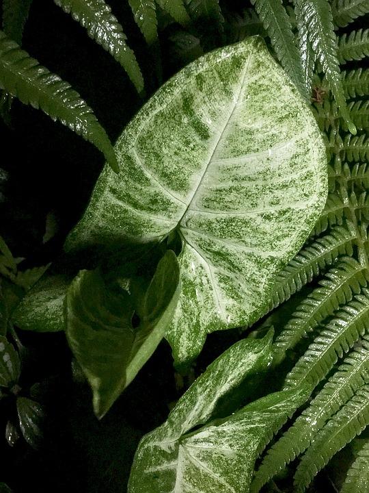 Leaves, Green, Green Leaves, Nature, Green Leaf, Plants