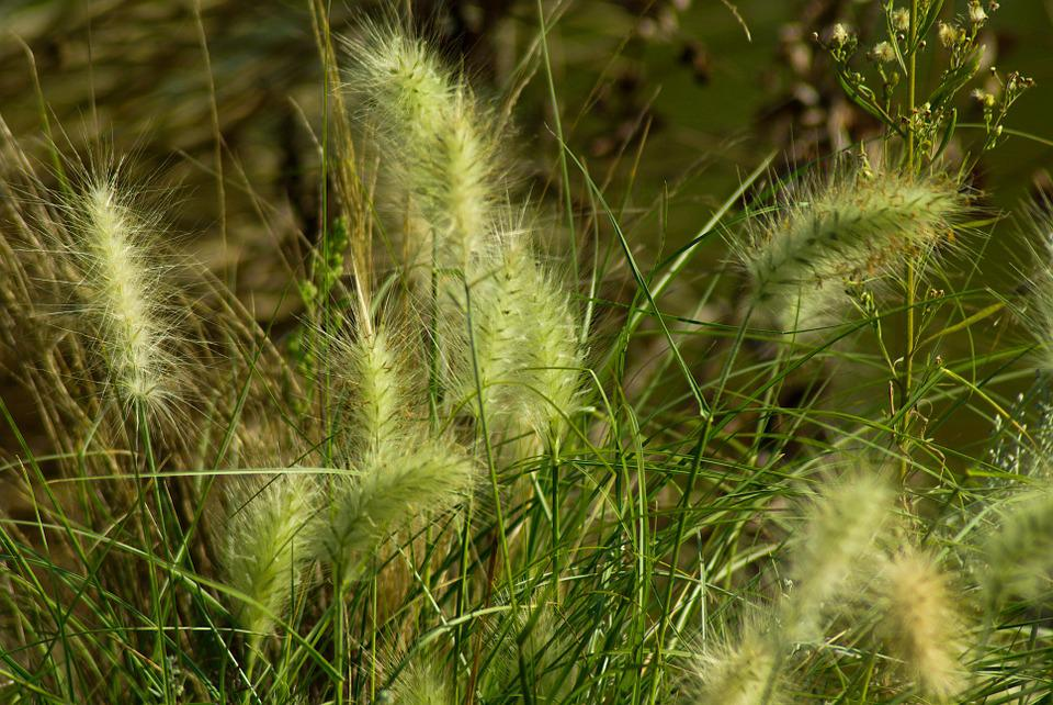 Plants, Marsh, Aquatic