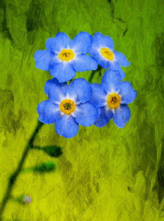 Flower, Nature, The Effect Of, Spring, Meadow, Plants
