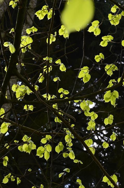 Leaves, Light, Nature, Plants, Tree, Green, Luminous
