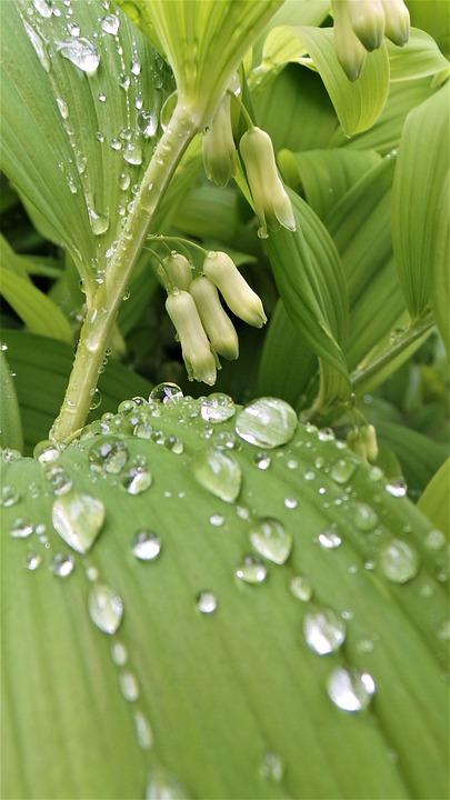 Leaf, Plants, Non, Nature, Trickle