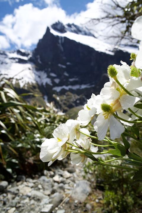 Nature, Flowers, Plants, Season, Beautiful, Park