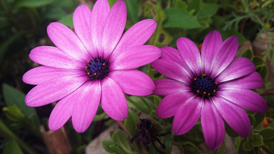 Flowers, Garden, Plants, Petals, Nature, Botany