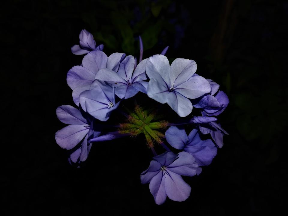 Fleure, Blue, Petals, Purple, Plants