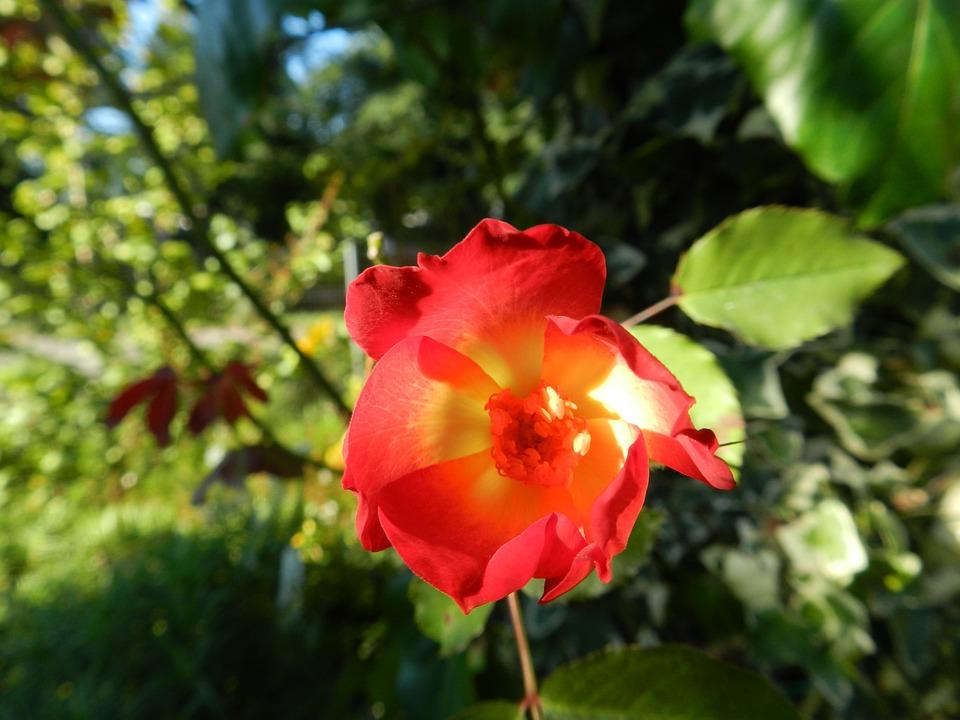 Flowers, Plants, Smells Of étè