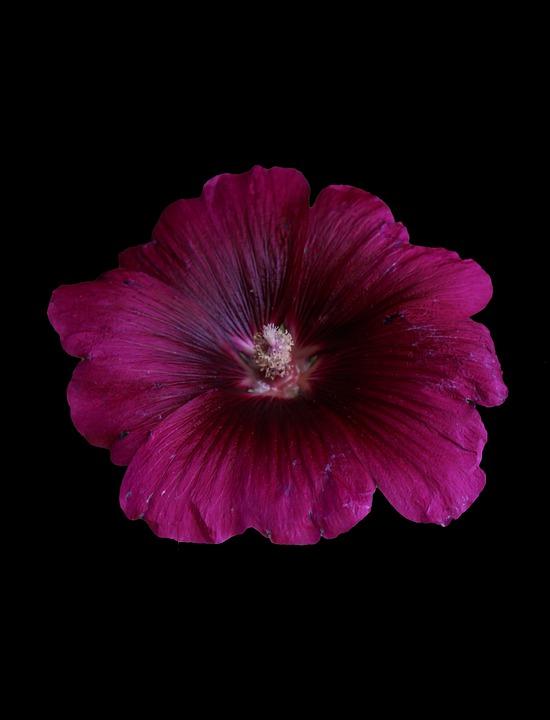Flower, Flowers, Spring, Nature, Summer, Beauty, Plants