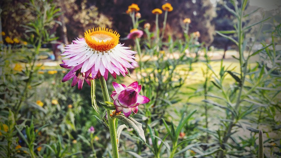 Free photo plants spring weed pink flowers max pixel spring flowers plants pink weed mightylinksfo