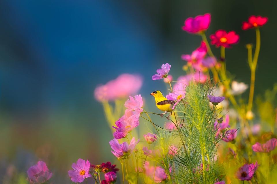 Flowers, Plants, Blooms, Blossoms, Spring, Summer, Bird