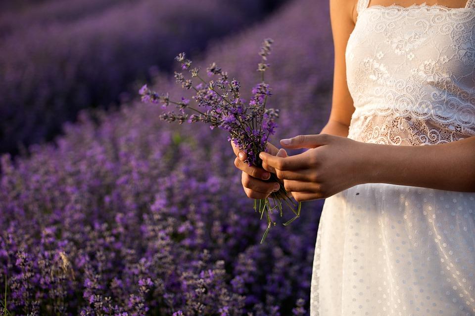 Lavender, Nature, Flowers, Plants, Purple, Summer
