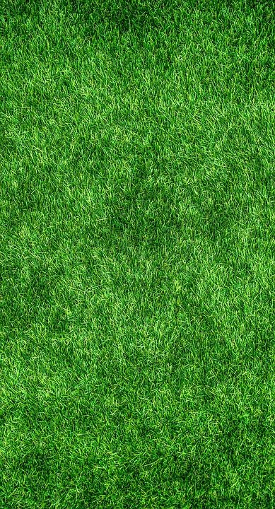 Grass, Green, Lawn, Plants, Texture, Background