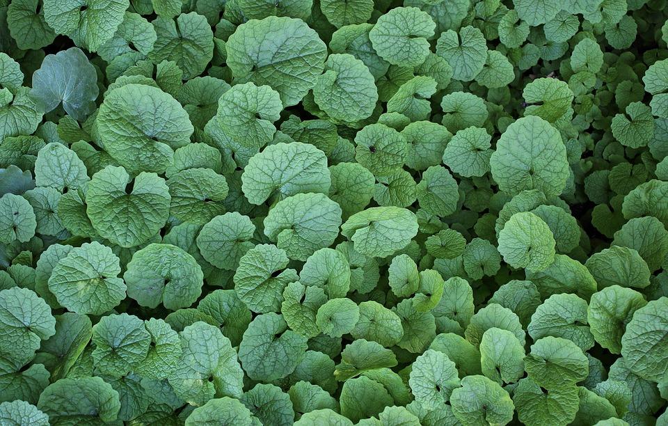 Leaves, Plants, Green, Garden, Nature, Texture, Nuances