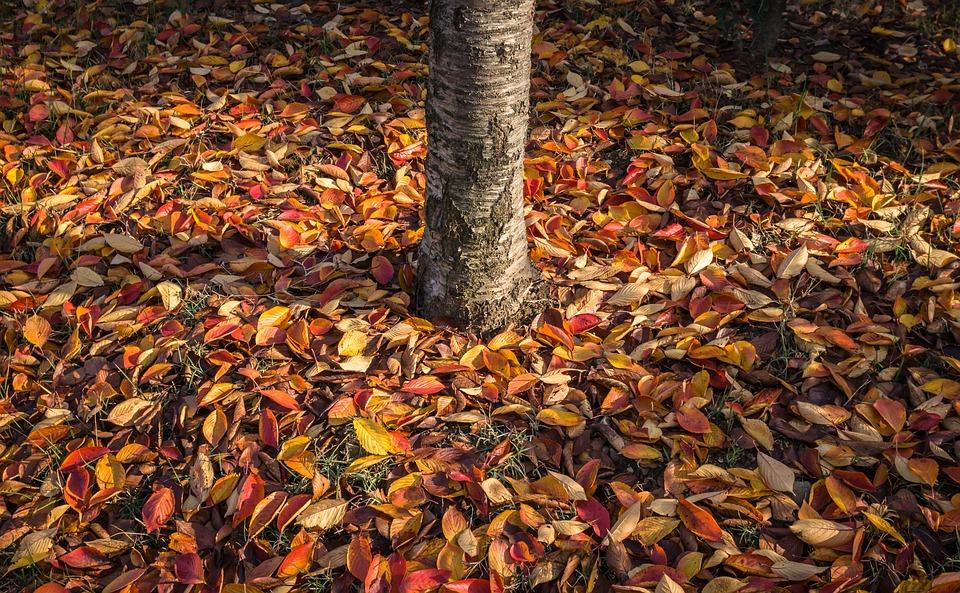 Leaves, Autumn Leaves, Autumn, Wood, Plants, The Leaves