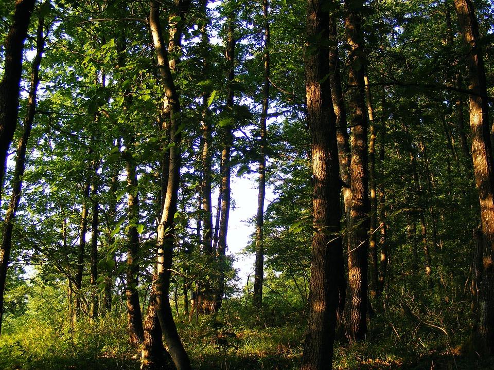 Nature, Plants, Trees, Tree, Oak, Jove 39 S