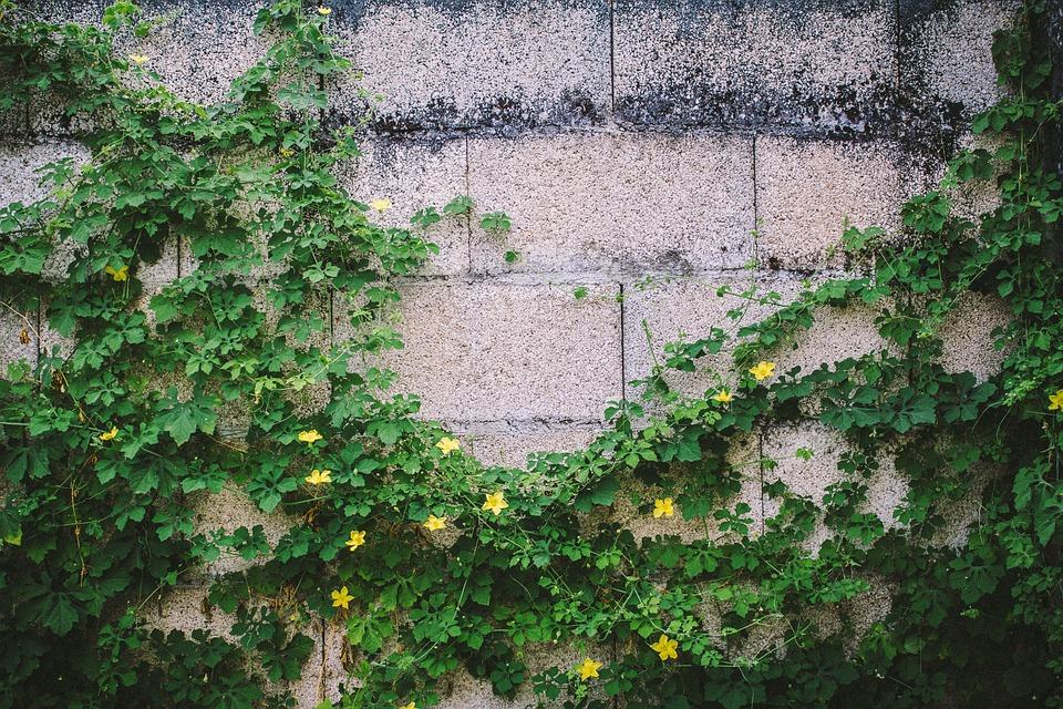 Nature, Plants, Vines, Leaves, Flowers, Wall