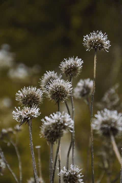 Plants, Weeds, Wild Flowers, Ice, Frost, Frozen, Winter