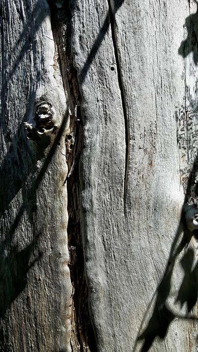 Wood, Texture, Plant, Tree, Tree Trunk, Plants, Ruffle