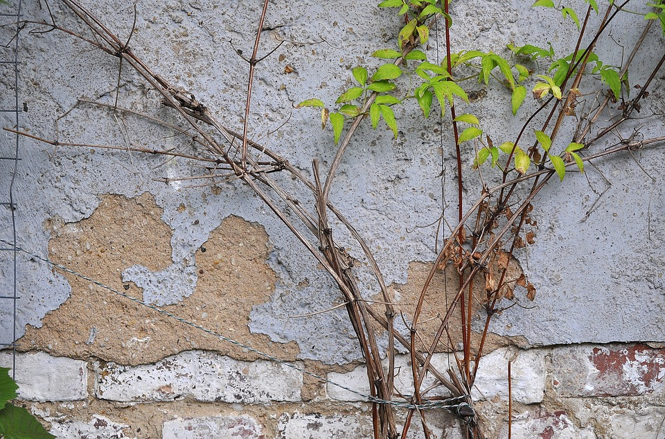 Wall, Plaster, Ranke, Leaves, Green, Facade, Grey