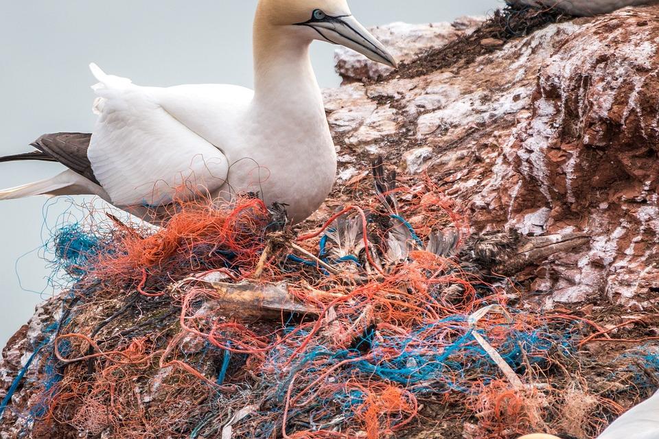 Free photo Plastic Waste Safety Net Spirit Network Dead Bird