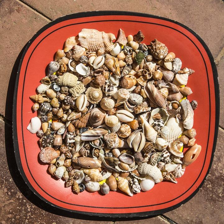 Shells, Sea, Plate, Floor, Red, Snail, Snails, Shell