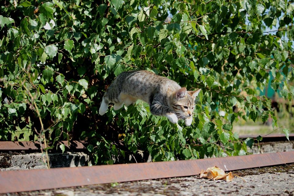 Cat, Kitten, Cat Baby, Jump, Play, Domestic Cat