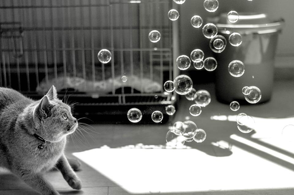 Cat, Bubbles, Animals, Play