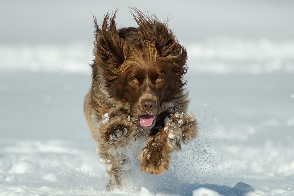 Dog, Nature, Animal, Pet, Winter, Snow, Run, Play