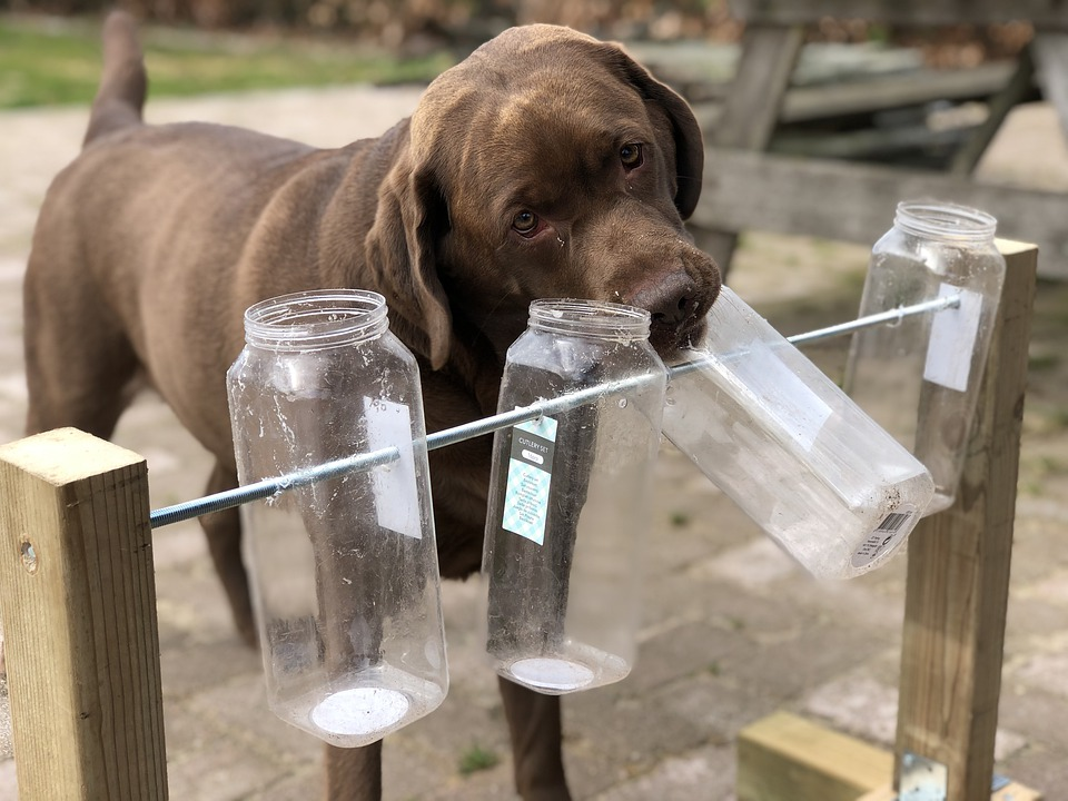 Dog, Toy, Nose Work, Play, Retriever, Pet