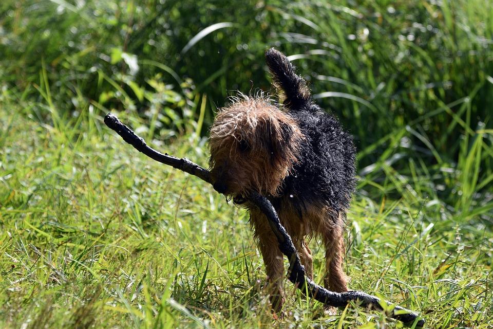 Dog, Animal, Branch, Play, Stick, Wet, Pet, Canine